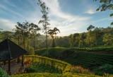 Ceylon Tea Trails (14 of 26)