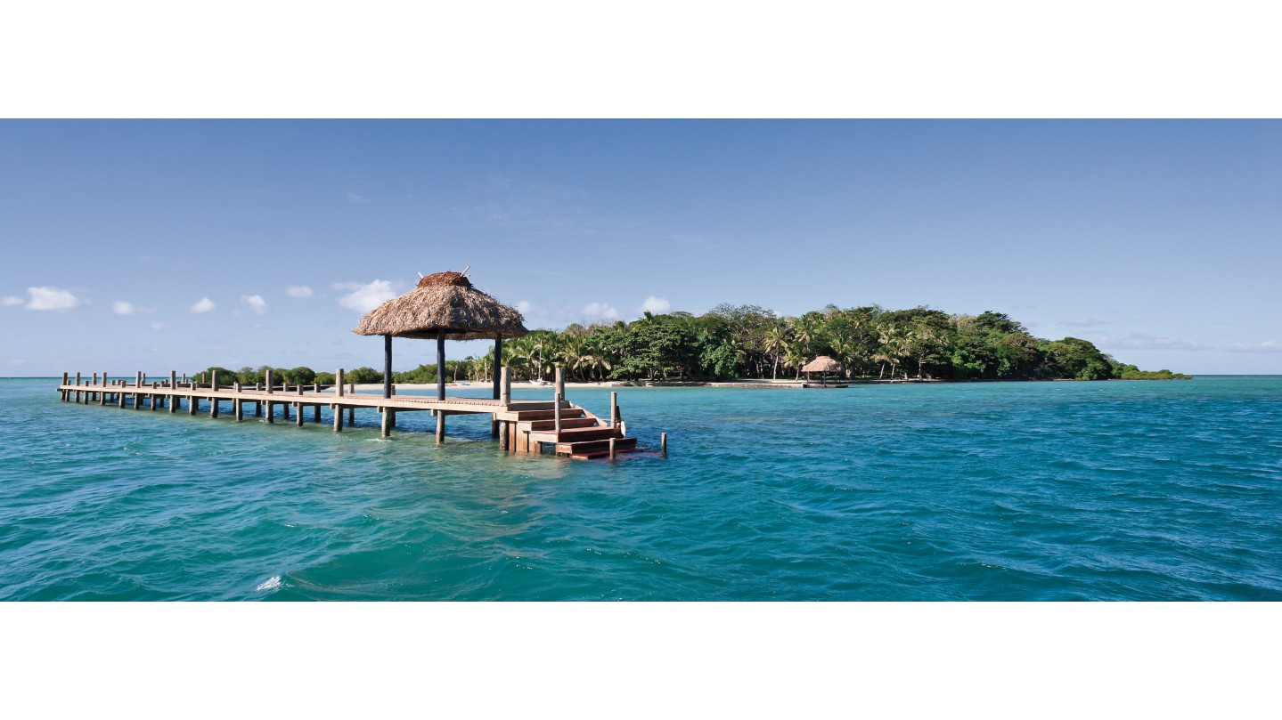 pdf Neurobiology of Central D1