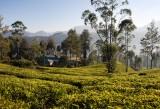 Ceylon Tea Trails (15 of 27)