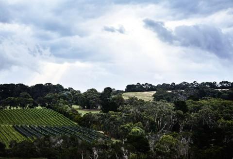 166 Balnarring Road, Merricks North, 3926 Victoria, Australia.