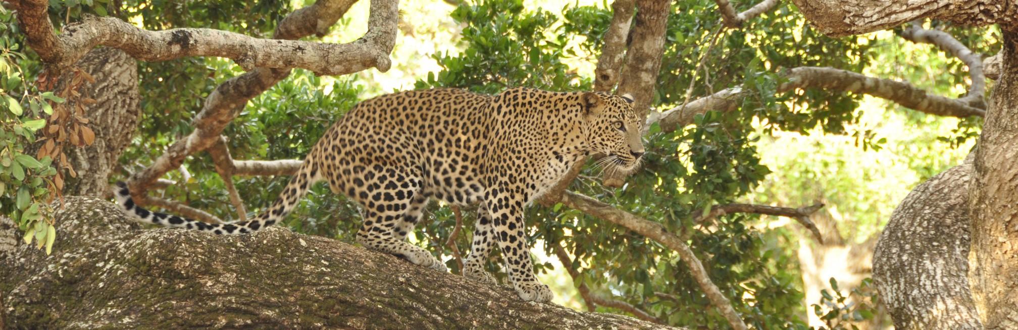 A spectacular Sri Lankan safari