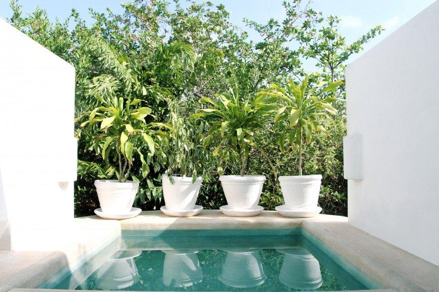 Photo of Jungle Suite with Plunge Pool